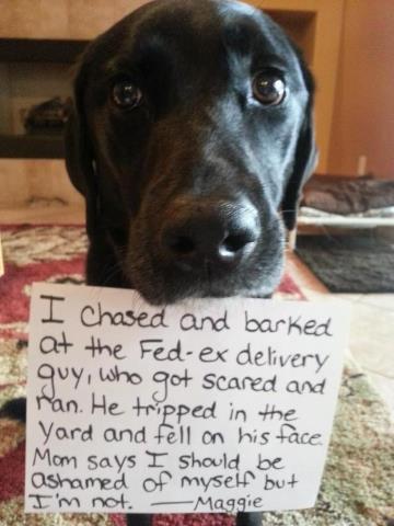 doggie shame