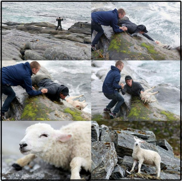 sheep-rescue-set